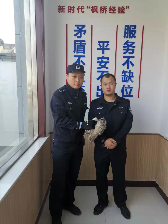 猫头鹰捕食受伤 警民联手施救